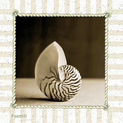 shell08