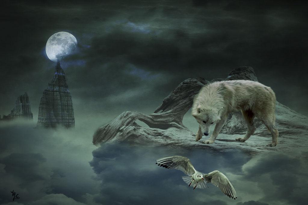 Le loup et la mouette 4f1f5448cc9fe3f3314e