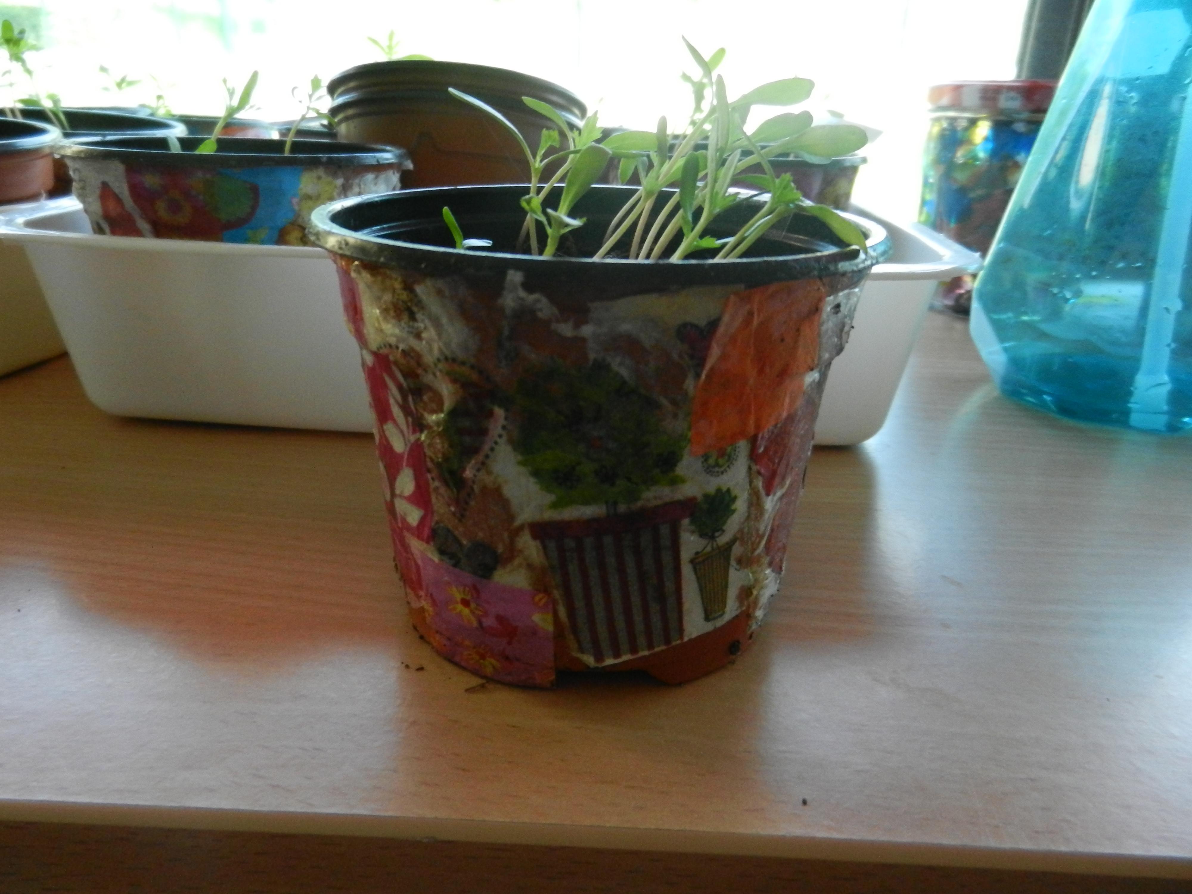pot décoré au décopatch et semis de fleurs