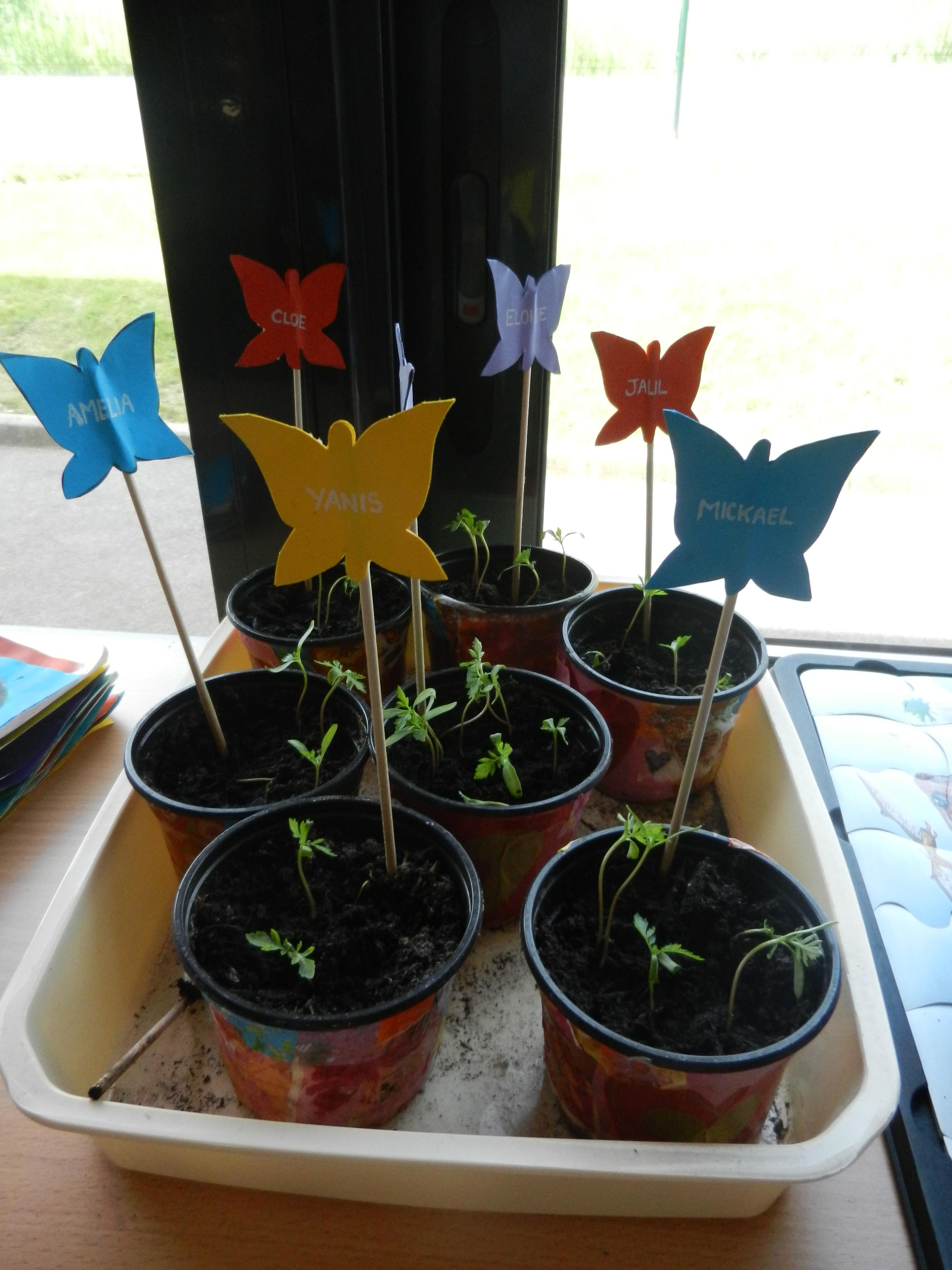 Pots décorés au décopatch et semis d'oeillets